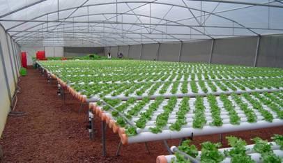 Cultivo hidrop nico t cnicas y sistemas plantas flor for Materiales para un vivero forestal