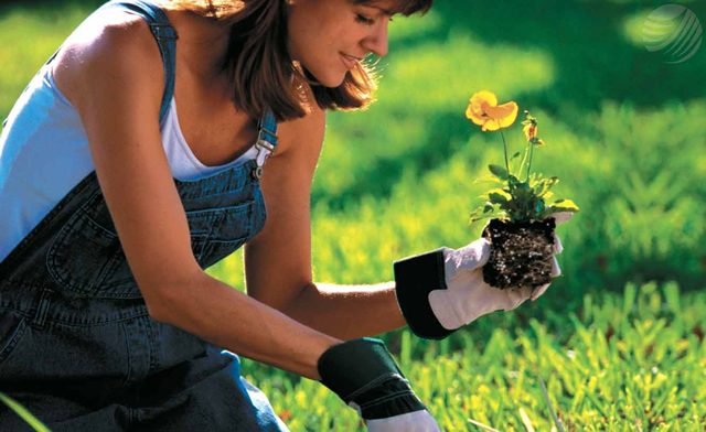 Cinco Tareas Básicas de Jardinería