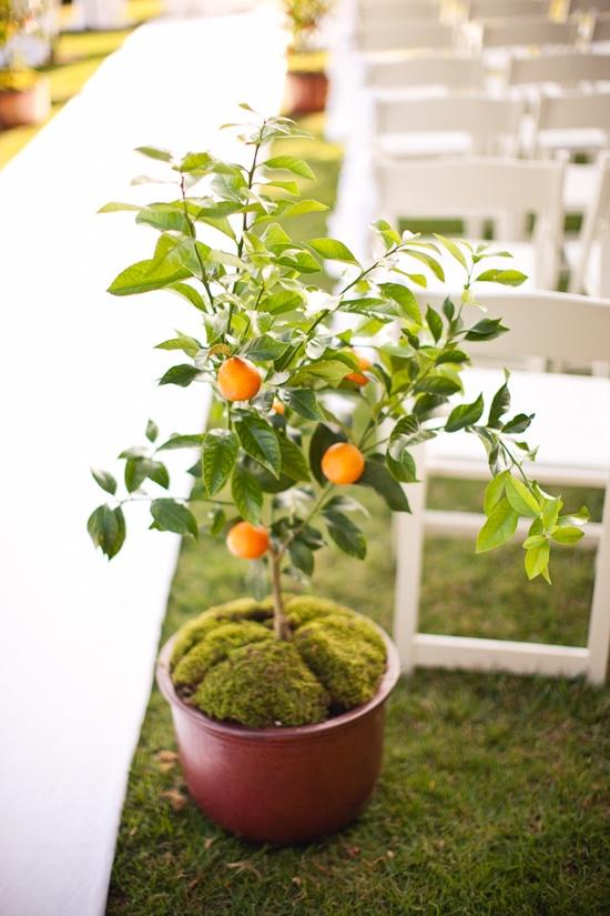 Reproducción de naranjo por esquejes