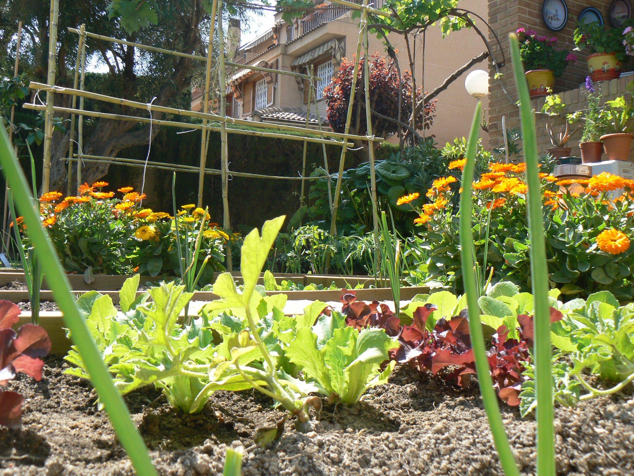C mo cultivar un huerto familiar en canteros huerta flor for Que plantas se siembran en un huerto