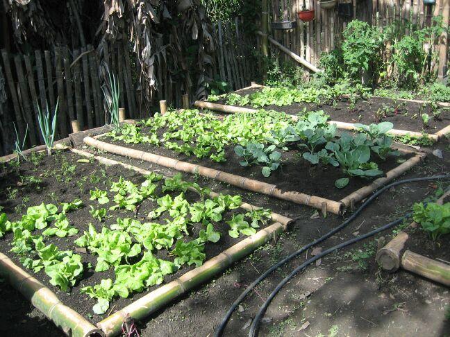 C mo cultivar un huerto familiar en canteros huerta flor - Plantas de huerto ...