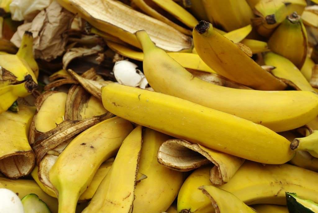 Fertilizantes caseros para las plantas: Alternativas variadas y económicas