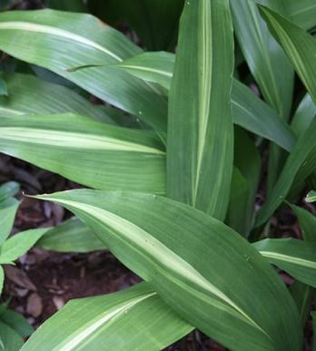 Plantas De Interior Sin Flores. Stunning With Plantas De Interior ...