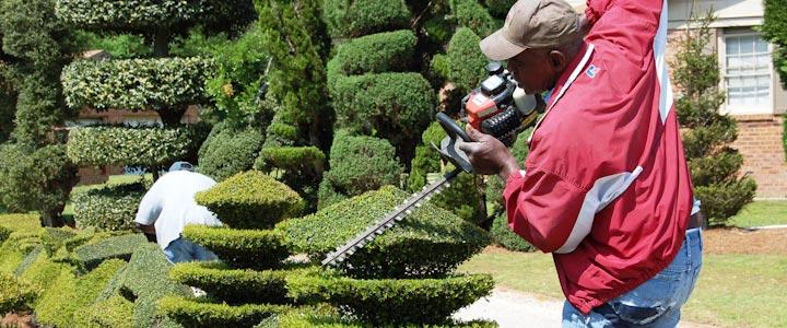 Poda topiaria haciendo arte con las plantas dise o jardin for Jardines con arboles y arbustos