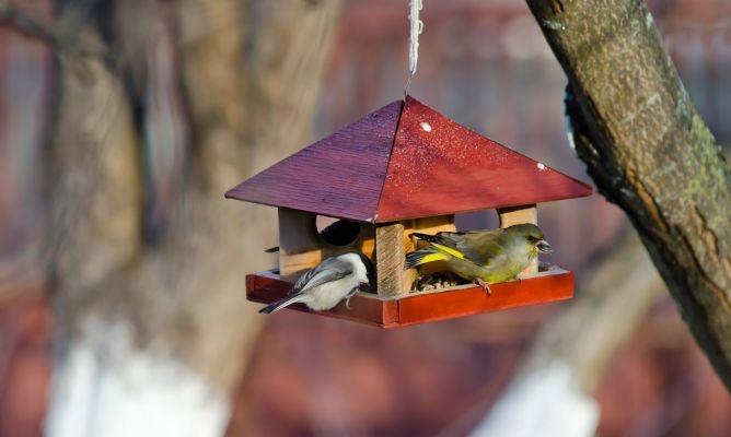 Trucos para atraer pájaros al jardín