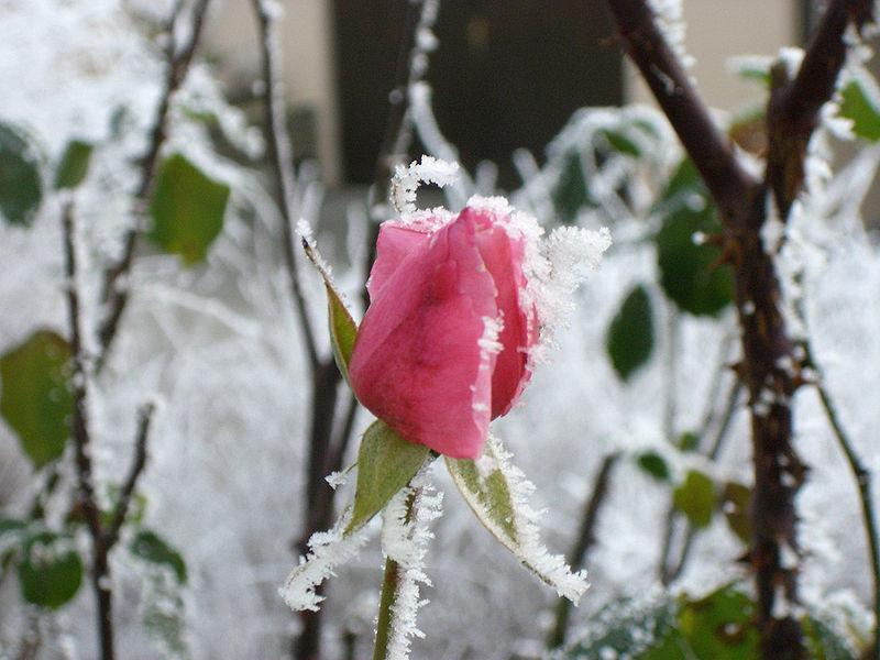 Cómo proteger las plantas ante la llegada del invierno