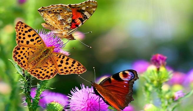 mariposas_jardin_1