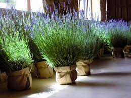Plantas arom ticas para el balc n cu les y c mo for Cultivo de plantas aromaticas y especias