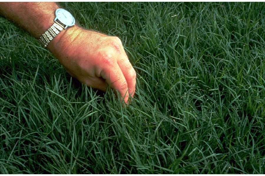 bermuda grass_USDA_1