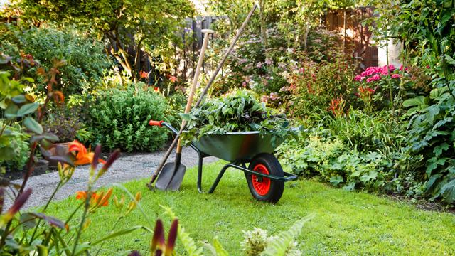 Cuidando el jardín en verano: Riego y prevención de plagas y enfermedades