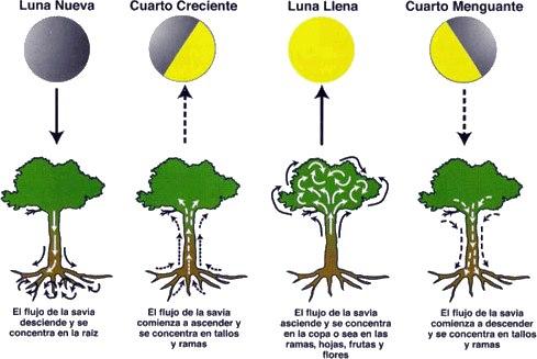 las plantas y la luna
