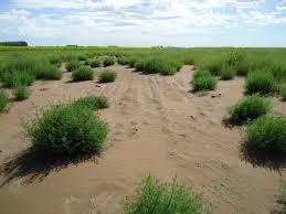 Qué significa nutrir el suelo: nutrición del suelo con minerales