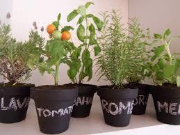 Cómo combinar especies de plantas para combatir plagas en el jardín o la huerta
