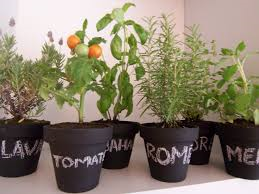 aromaticas en huerta