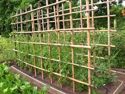 Cómo entutorar plantas en el jardín y en la huerta