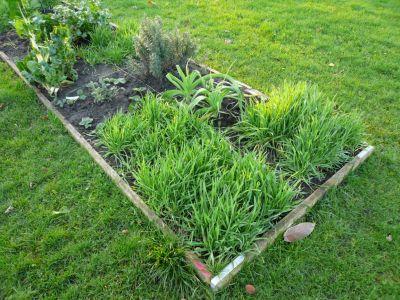 Agricultura sustentable qu son los abonos verdes y c mo for Que son cultivos asociados