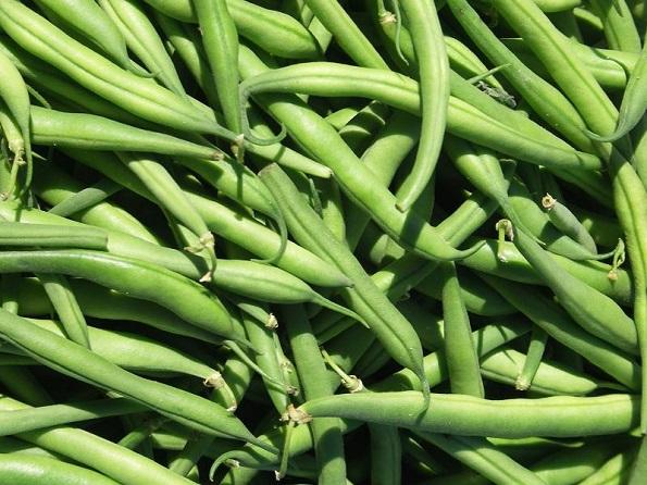 Huerto en casa: Cultivo de judías verdes o chauchas