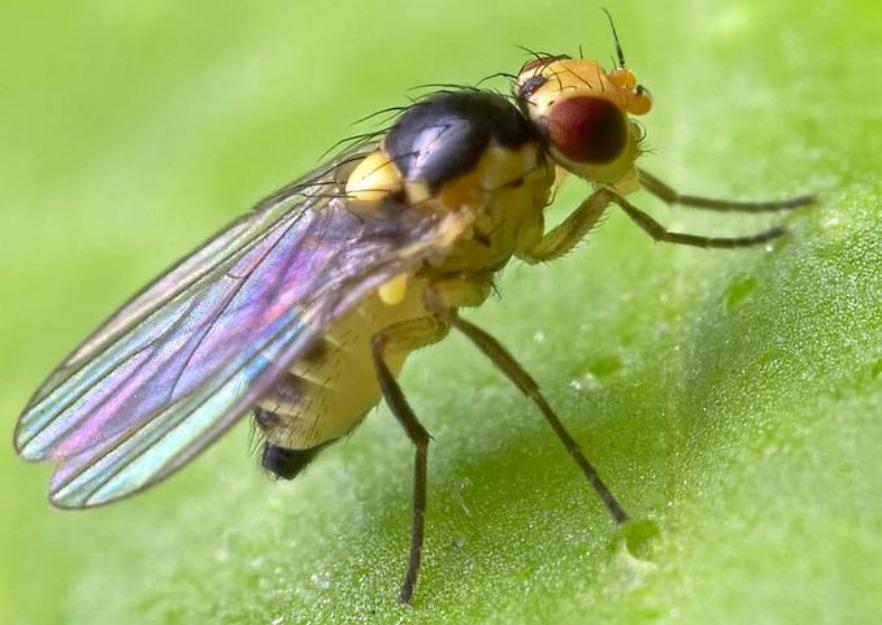 C mo poblar un jard n que atraiga las abejas polinizadoras for Ahuyentar abejas jardin