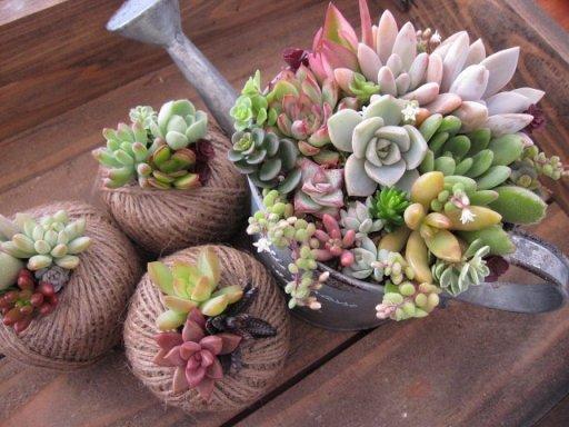 C mo armar espacios decorativos con suculentas plantas for Plantas decorativas para interiores