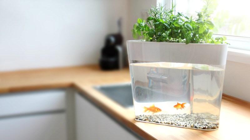 C mo hacer una mini huerta con sistema de acuaponia huerta for Como hacer un criadero de peces