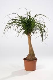 Cuáles son las plantas en boga en diseño de interior