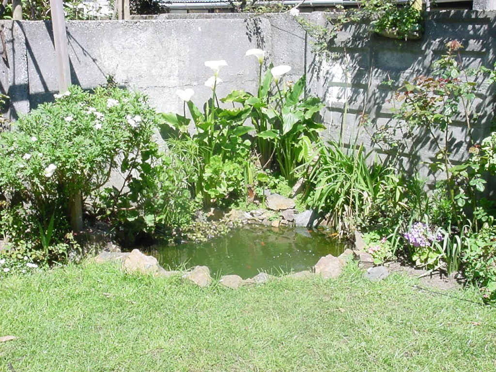 C mo armar un estanque en el jard n una misma dise o for Estanque jardin pequeno