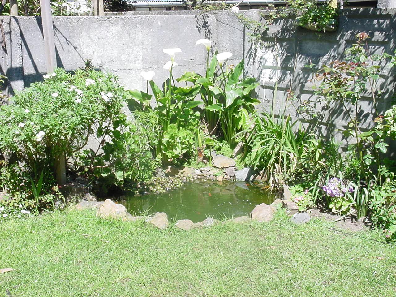 Cómo armar un estanque en el jardín una misma