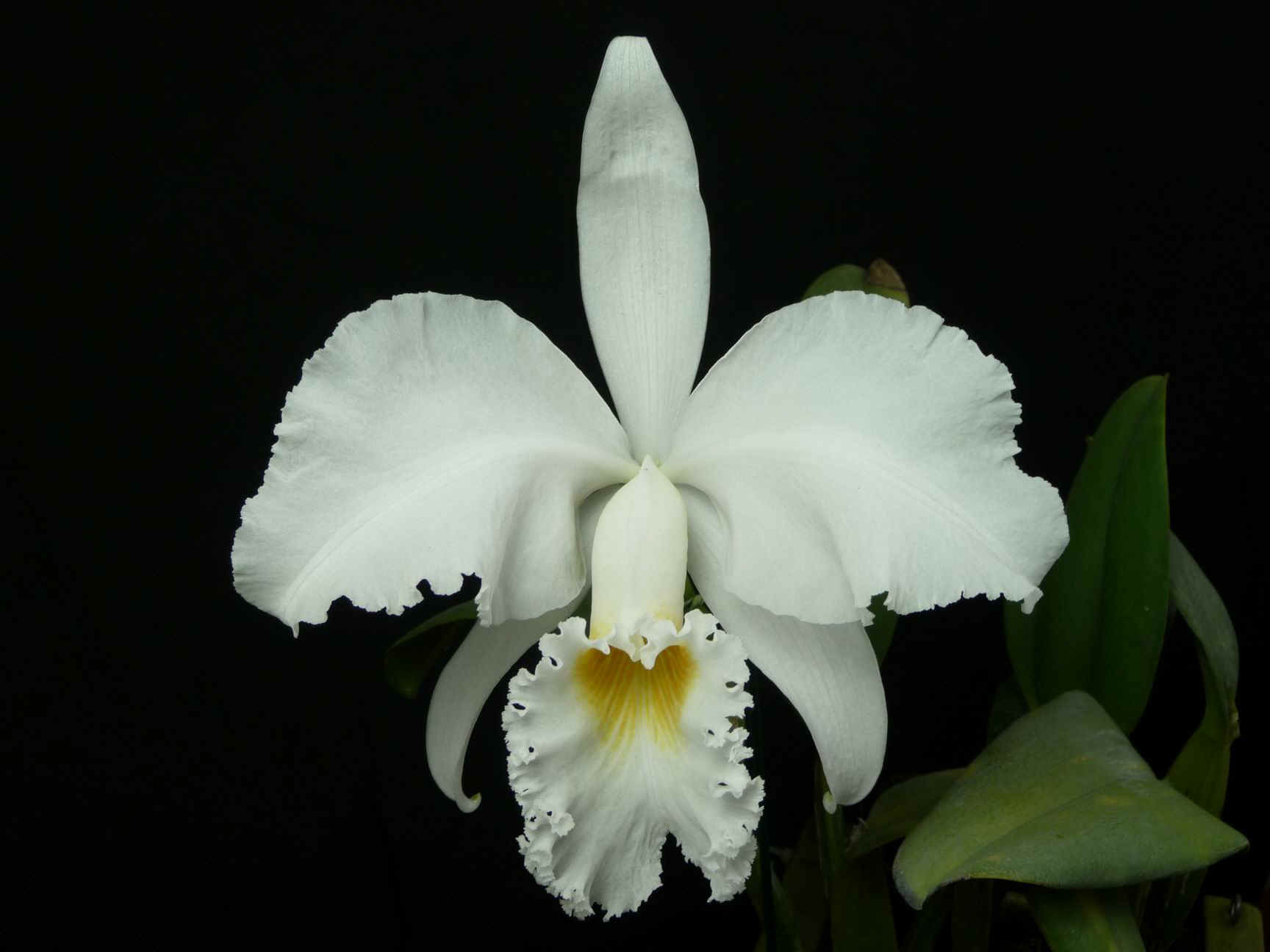 El secreto del riego en las orquídeas