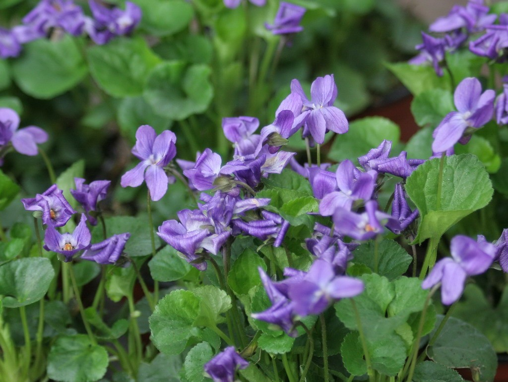 Plantas que florecen en invierno ave del para so y for Aspiradora de hojas de jardin