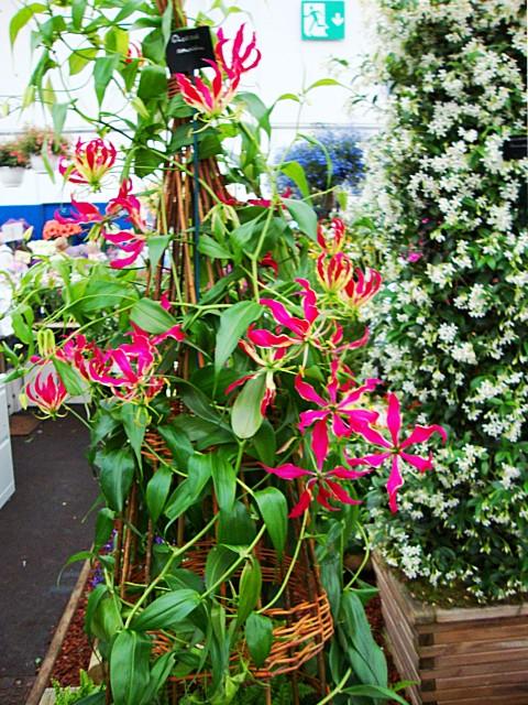 Foto: Cook's Garden Centre