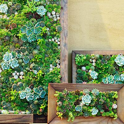 Cómo armar cuadros con plantas suculentas
