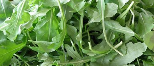 Cómo cultivar rúcula en casa
