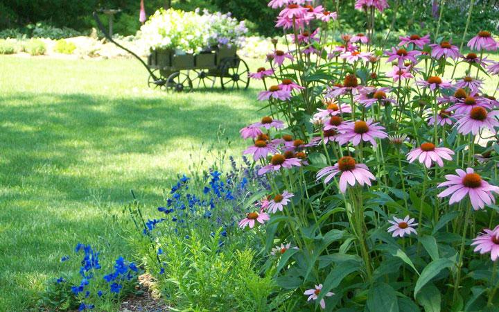 Cómo proteger las plantas del calor excesivo en el verano