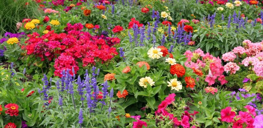 Cuál es la conveniencia de tener flores anuales en el jardín