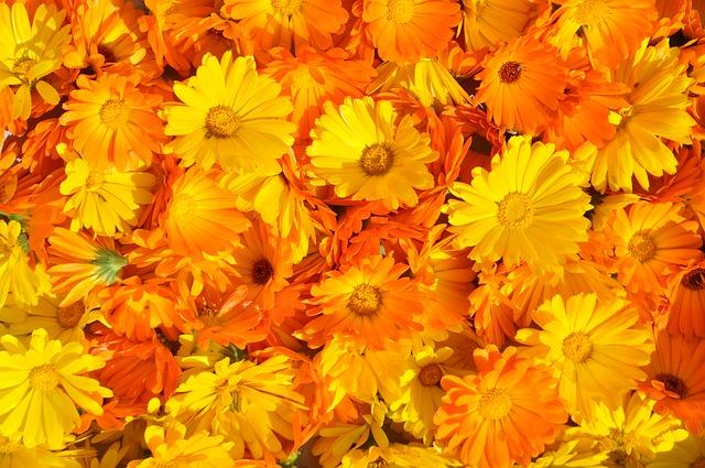 marigold-237828_640