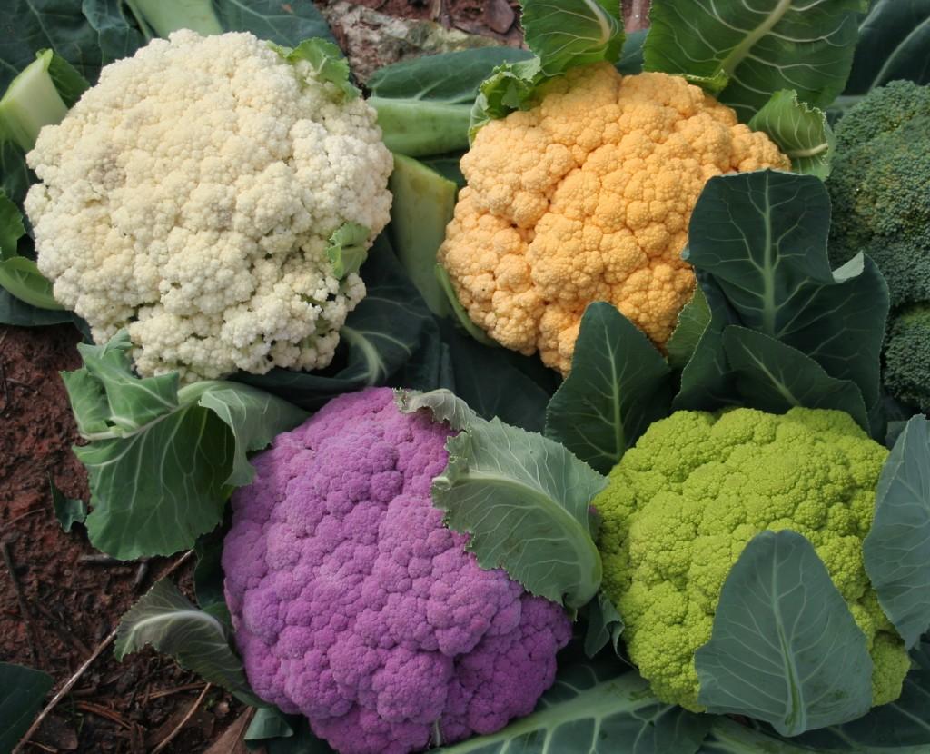 Coliflor (Brassica oleracea var. botrytis): Cultivo, riego y cuidados