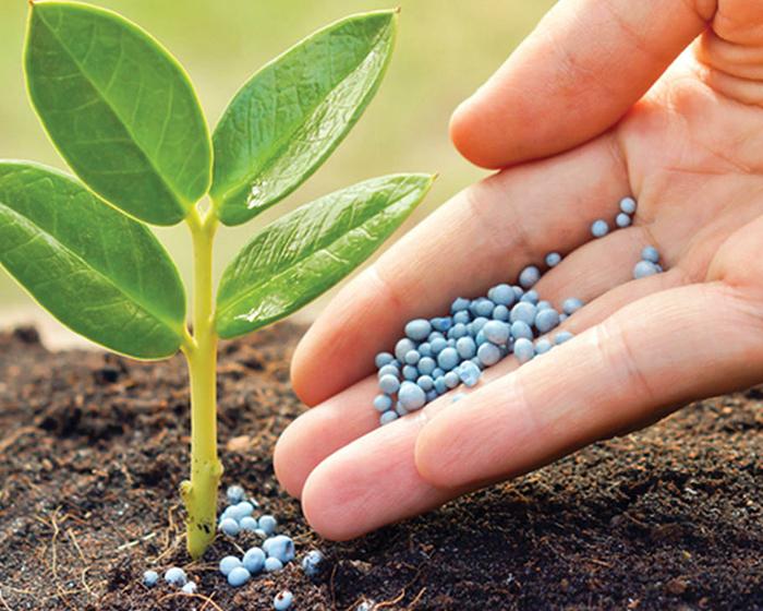 ¿Qué nutrientes necesitan las plantas de un jardín o huerta?