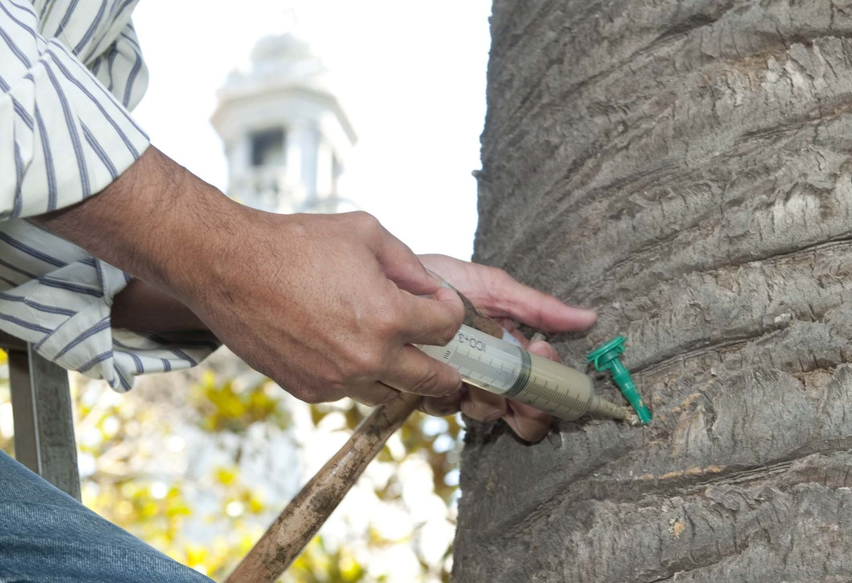 Truco para controlar mejor plagas y enfermedades en árboles adultos