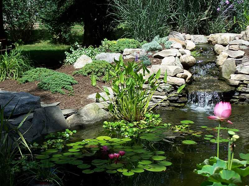 C mo planificar un estanque para el jard n paisajismo for Plantas para estanque exterior