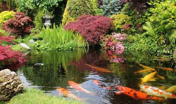 Como Planificar Un Estanque Para El Jardin Paisajismo Flor De - Jardin-con-estanque