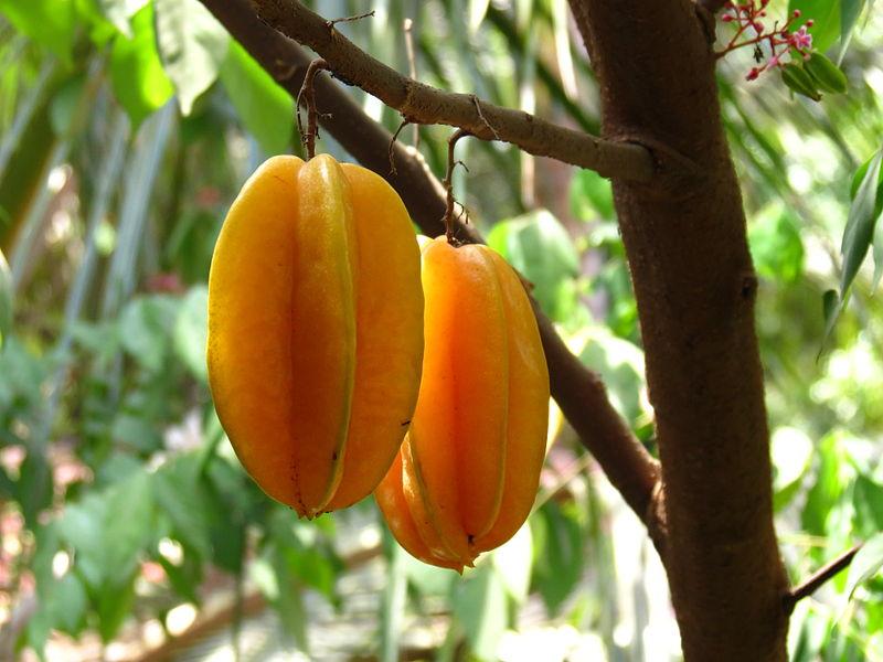 Frutales exóticos: La carambola o fruta de estrella (Averrhoa carambola)