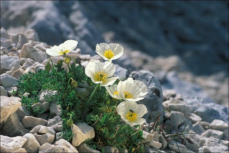 Herbáceas florales que pueden cultivarse en las escalinatas del jardín