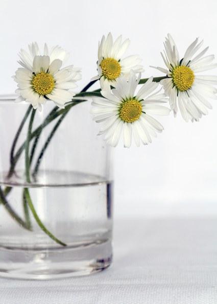 Trucos para mantener vivas las flores cortadas