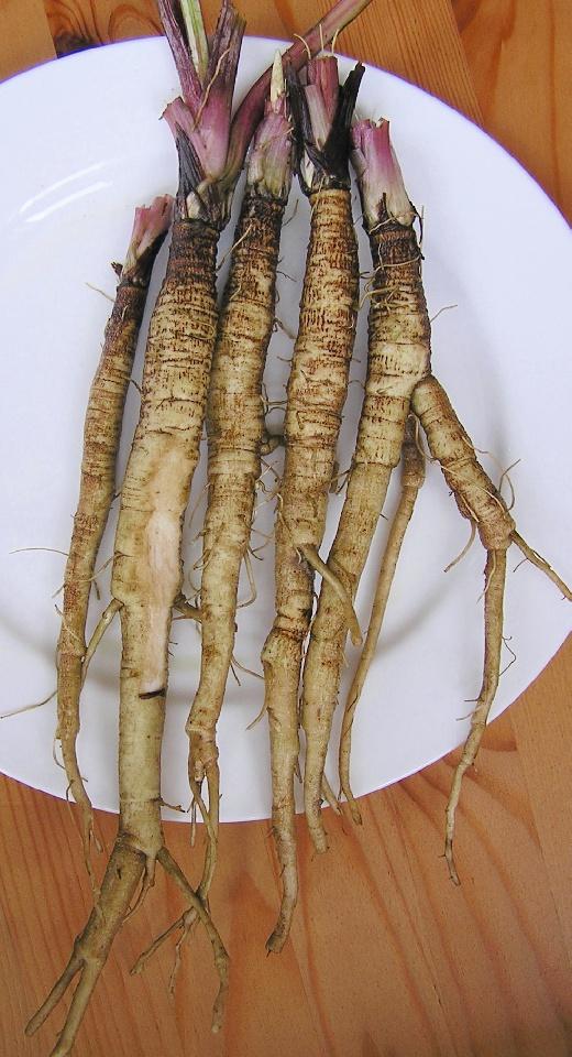 raices-bardana