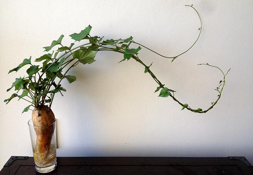 Cómo usar hortalizas como plantas de interior