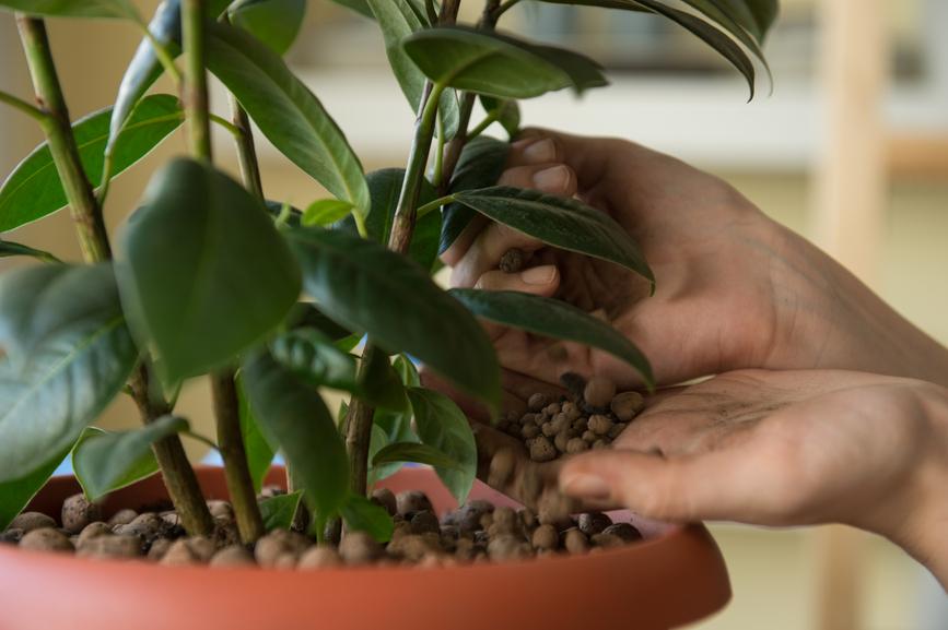 Recomendaciones para fertilizar plantas de interior
