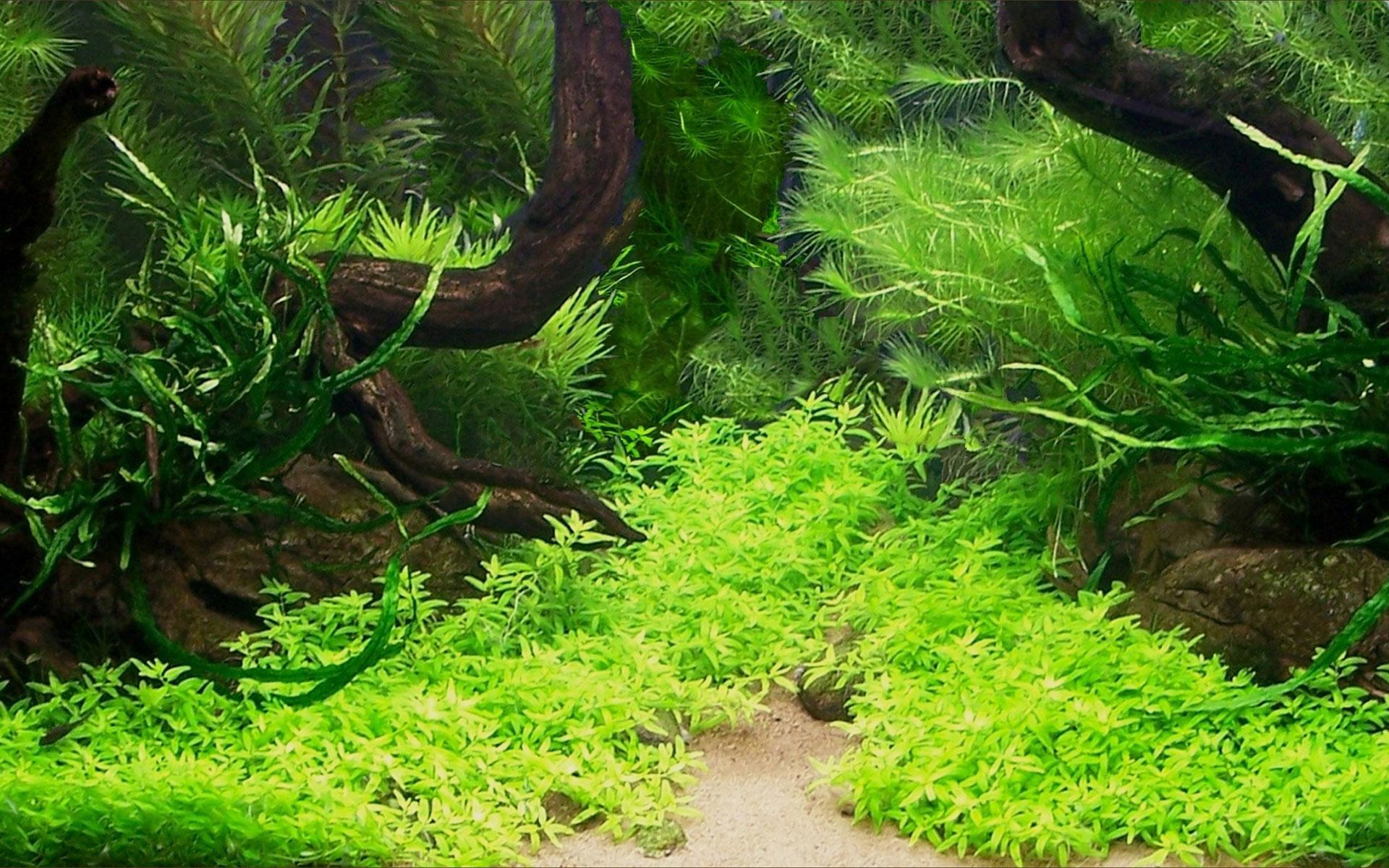 Principios básicos para cultivar plantas acuáticas