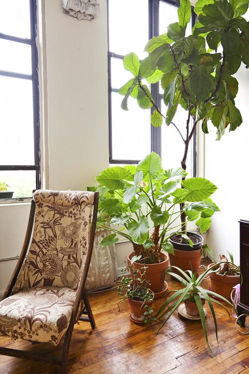 Cómo iniciarse en el cultivo de plantas en casa
