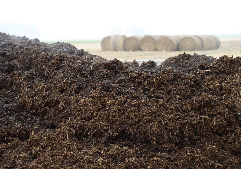 Desventajas del uso de estiércol como fertilizante