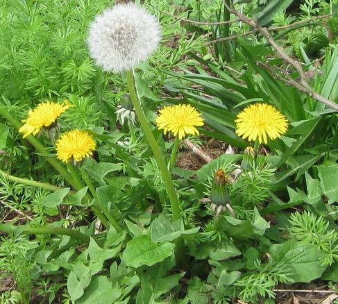 Cómo combatir las malas hierbas con bicarbonato de sodio